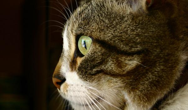 Котките прекарват 70% от деня си сън, което означава, че котка която е на 9 години е била будна само 3 от живота си