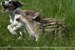 Куче и глиган - приятелство
