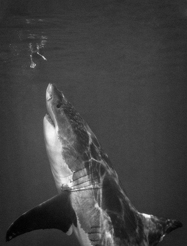 Плувай си, патенце