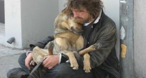 Бездомно куче