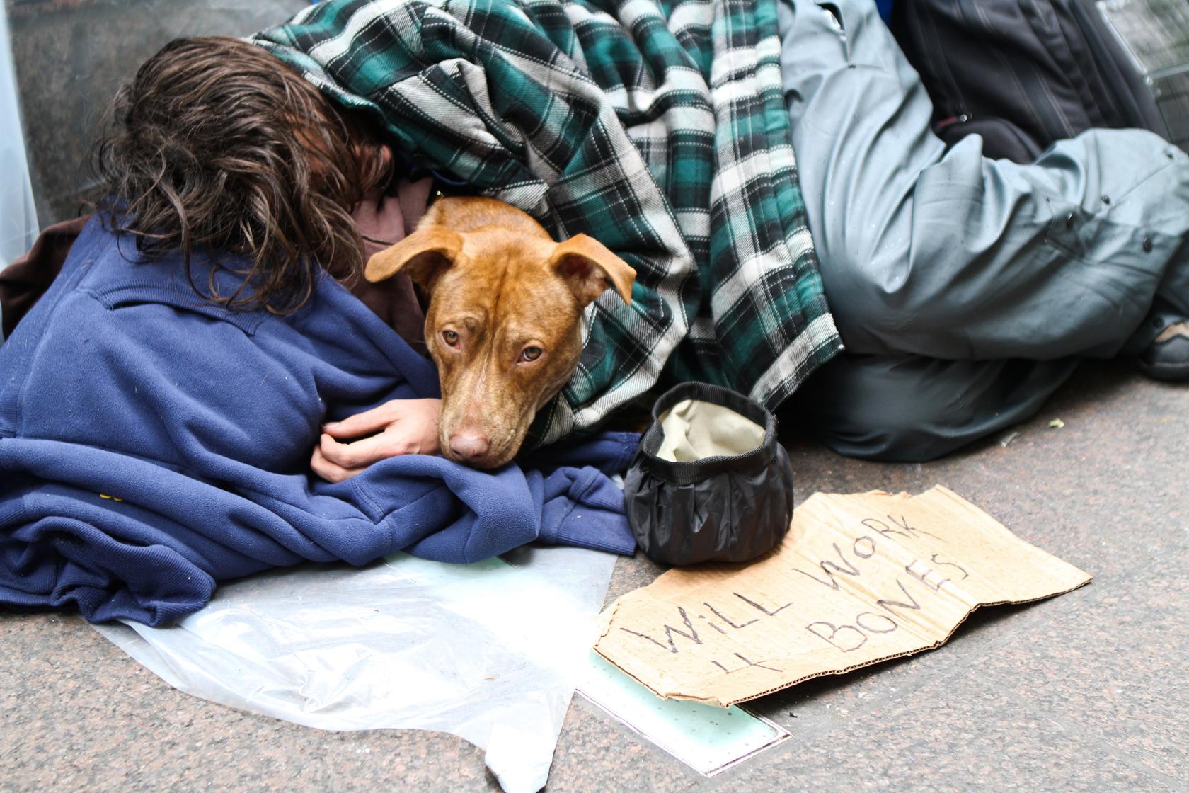Връзката между човека и неговото куче