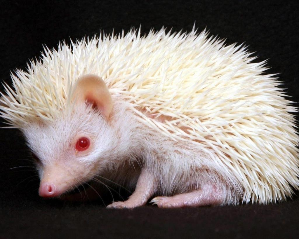 jivotno-albinos-10