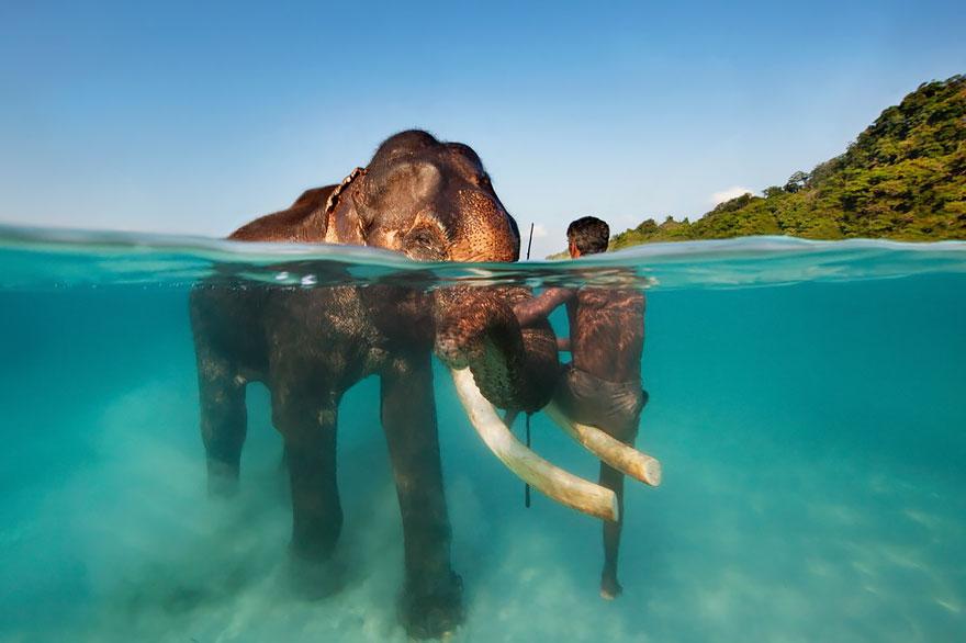 pluvashtiq-slon