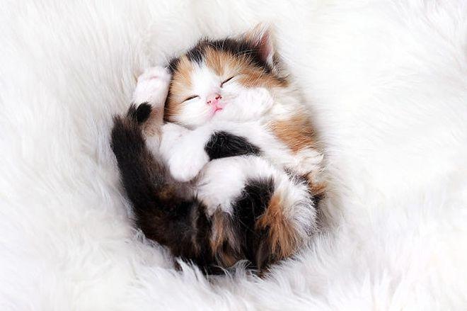 zaspalo-kote-18