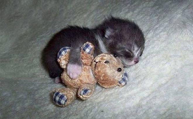 zaspalo-kote-3