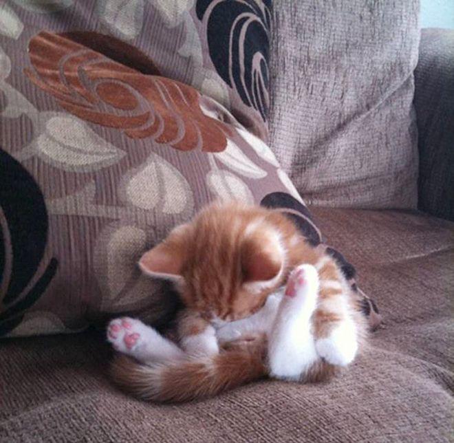 zaspalo-kote-7